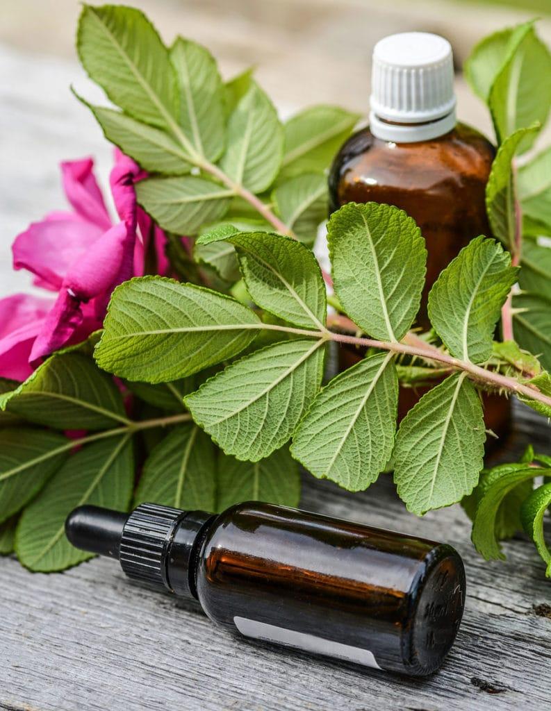 Herbes pures pour préparation d'huiles essentielles
