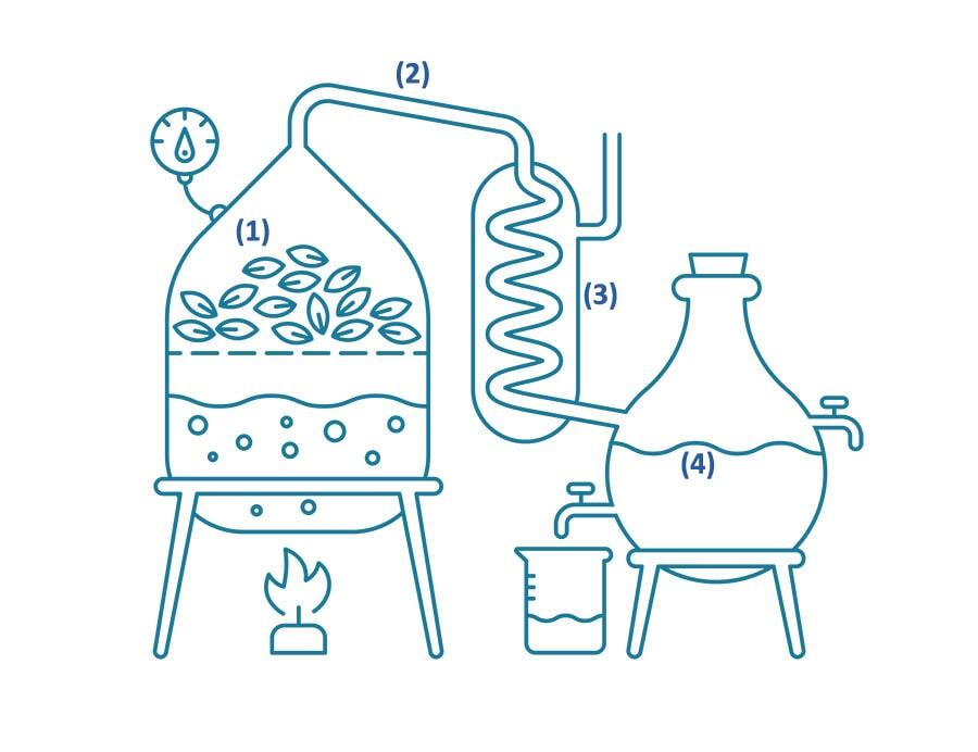 Schéma du processus de distillation pour les huiles essentielles